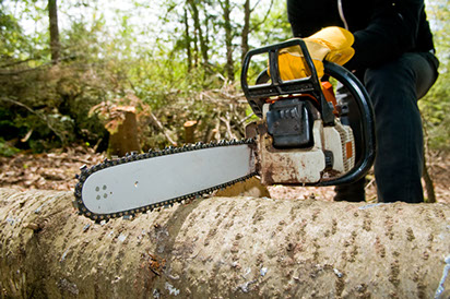 Chainsaw Cutting and Removing Tree